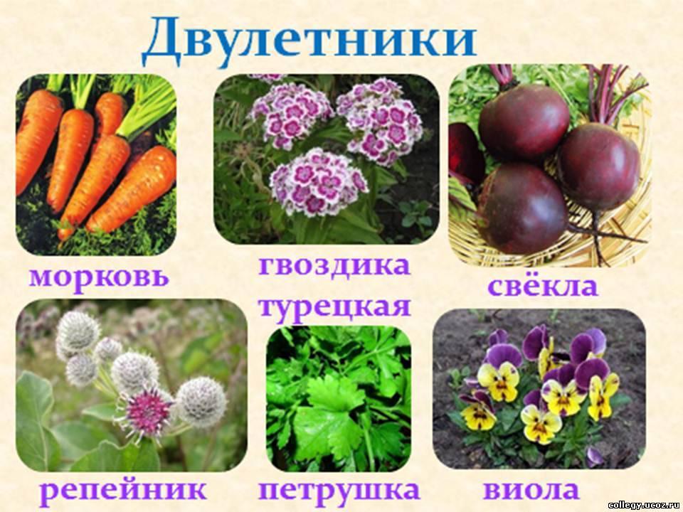Доклад о многолетних растениях 6524